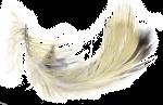 anavafoundation Logo